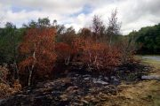 Scorched Earth and Withered Leaves