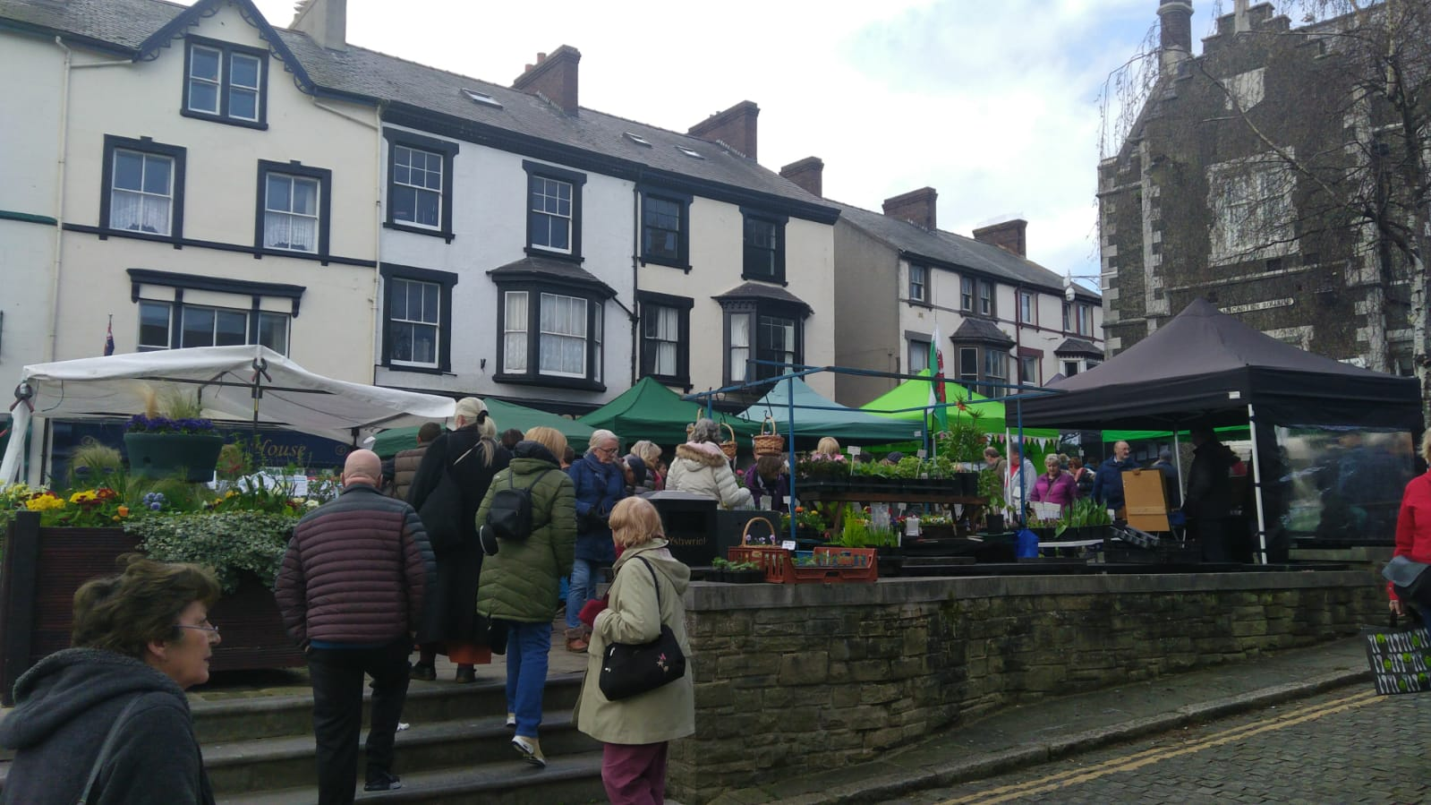 Conwy Square - Seed fair 2019